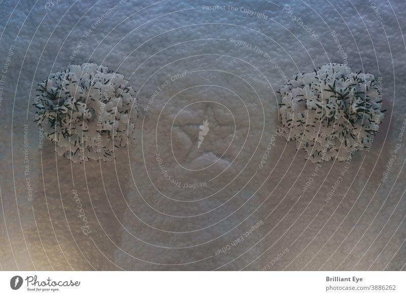 Abdruck Sternsymbol im Schnee neben schneebedeckten Tannen Frost Natur gefroren Boden frisch Noel Baum Symbol Kiefer Raum festlich traditionell Winter Saison