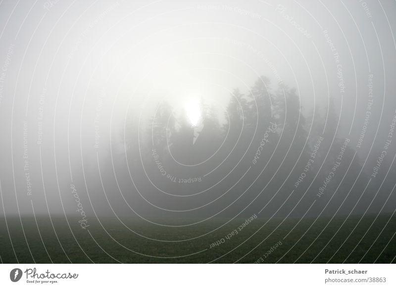 Nebelsonne Wald dunkel Berge u. Gebirge Sonne Landschaft Unschärfe
