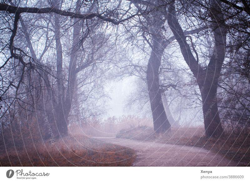 Bäume im Nebel Winter kalt Landschaft Umwelt Menschenleer Wetter Außenaufnahme Natur Kälte verwunschen neblig Spaziergang Wegbiegung Park