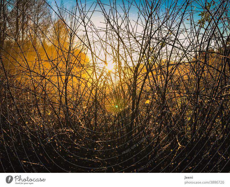 Herbstlich goldene Sonnenstrahlen im Nebel kommen durch das Geäst im Wald | es leuchtet gold, gelb, orange und blau Nebelschleier Nebelstimmung Natur Nebelbank