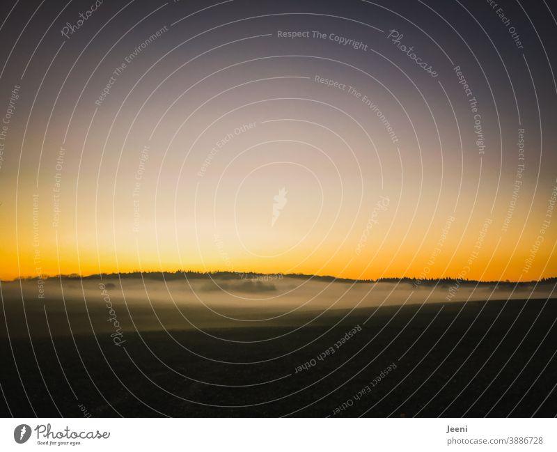 Herbstlicher Sonnenuntergang im Nebel | Horizont leuchtet orange und blau | Nebelschleier liegt in den Bäumen Nebelstimmung Natur Nebelbank Nebelmeer Nebeldecke