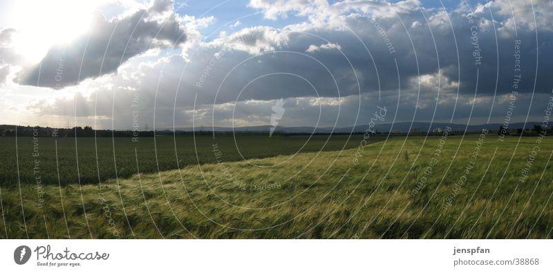 Der Regen ist vorbei Wolken Graffiti Feld Wind Wetter groß Getreide Panorama (Bildformat) Pflanze