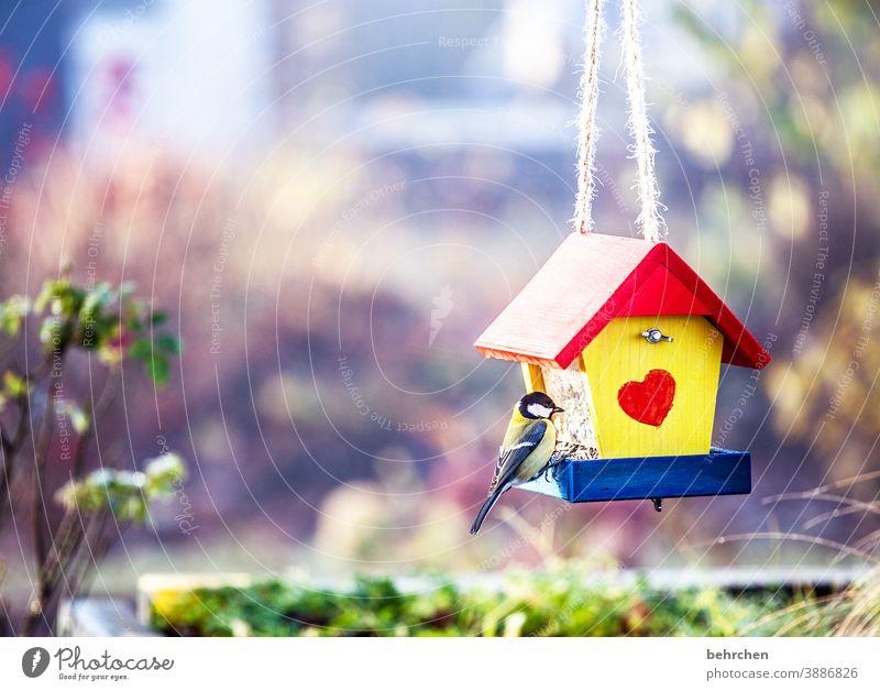 meisenlieblingsplatz Tierschutz Liebe klein Singvögel Menschenleer Blaumeise Kohlmeise Futter Schnabel Feder Tierporträt Wildtier Tierliebe Sträucher Vögel