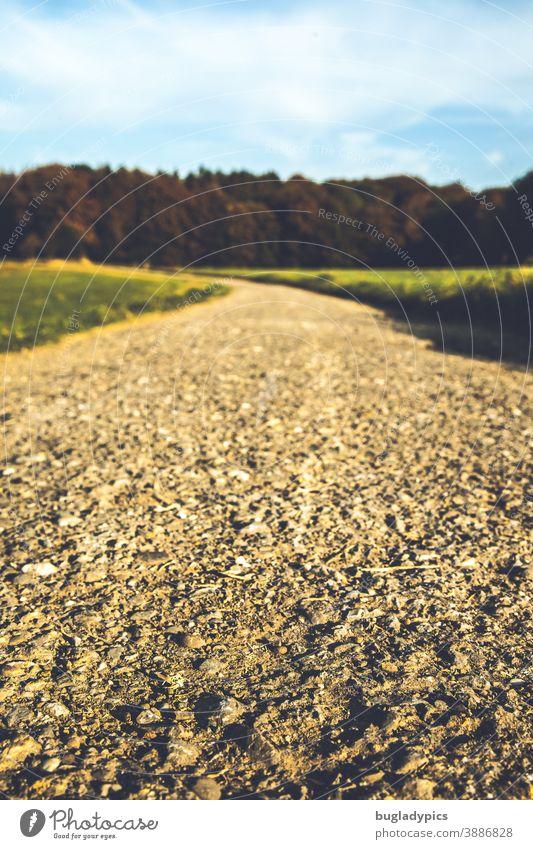 Weg über Felder in den Wald Wege & Pfade Schotterweg Fußweg unbefestigter Weg Aussicht Blauer Himmel Natur Straße Feldweg Landschaft grün Sand Lehm
