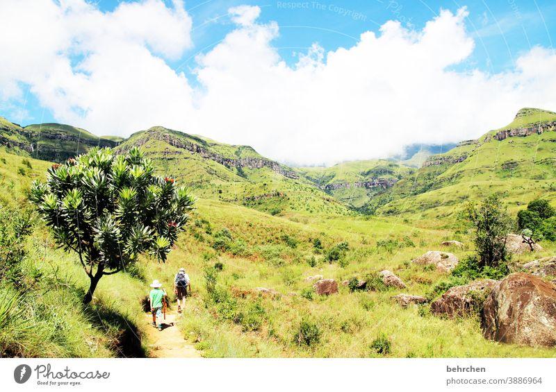 wanderlust Sonnenlicht Kontrast Licht Tag Außenaufnahme Fernweh schön traumhaft Südafrika Drakensberge Farbfoto Sohn wandern grün blau fantastisch exotisch