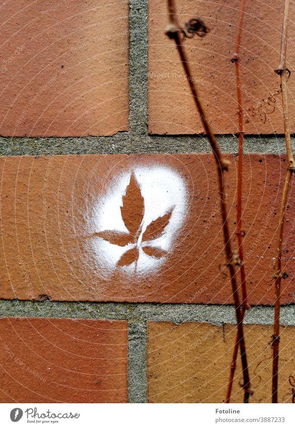 Natur pur? - oder an eine Mauer, die blattlose Ranken wilder Wein ziert, wurde ein Kanabisblatt mit weißer Farbe angesprayt Ziegel Wand Fassade Architektur