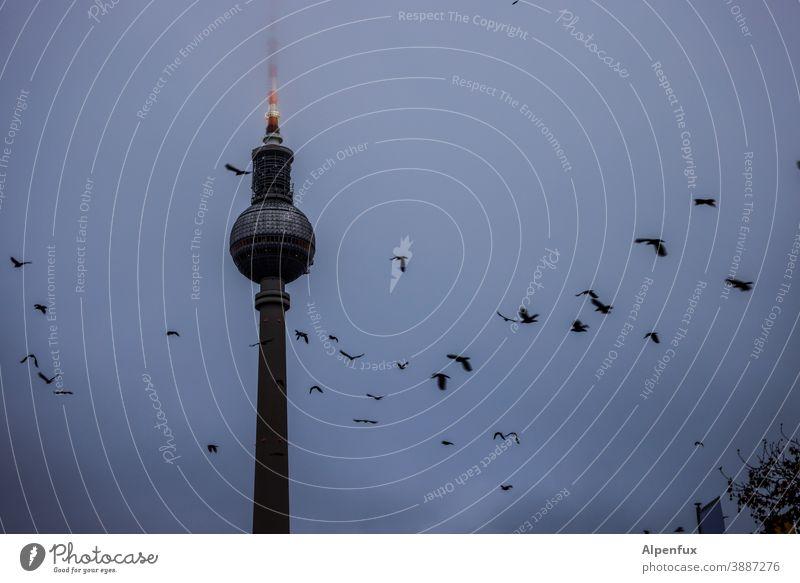 Rundflug Mitte Sightseeing Ferien & Urlaub & Reisen Großstadt Fernsehturm Berliner Fernsehturm Außenaufnahme Städtereise Bauwerk Deutschland Hauptstadt