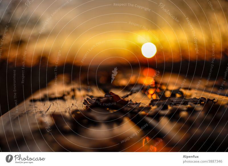 ein letzter Gruß... Sonnenuntergang Herbst Herbstlaub Natur Herbstfärbung Außenaufnahme Sonnenuntergangsstimmung Menschenleer herbstlich mehrfarbig Sonnenlicht