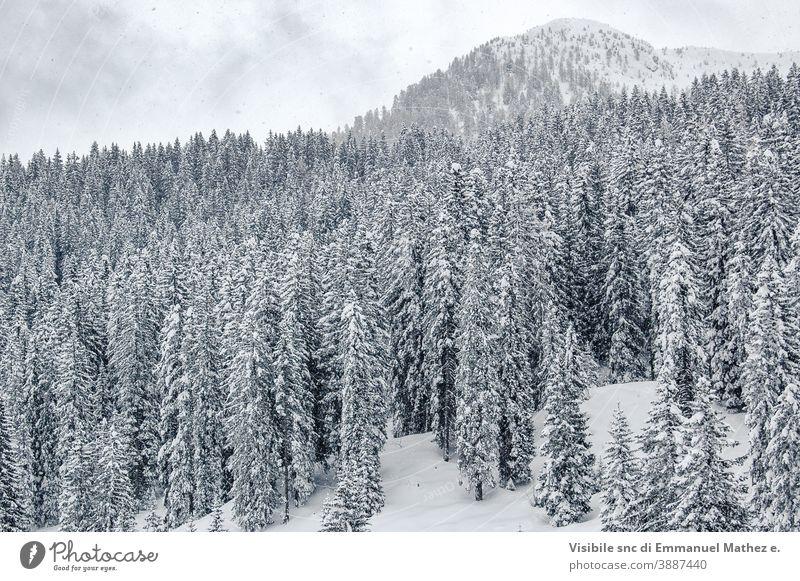 weisse Kiefern mit Schnee bedeckte Bäume Panorama Himmel Landschaft Natur Dolomit Berge u. Gebirge weiß Feld Frost Schönheit Cloud Italien Baum Ambitus Eis