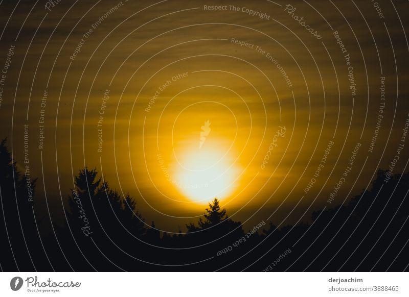 Ein Neuer Tag beginnt  . Sonnenaufgang von seiner schönsten Seite. Direkt über den Baumwipfeln. Sonnenaufgang - Morgendämmerung Nebel Außenaufnahme Landschaft