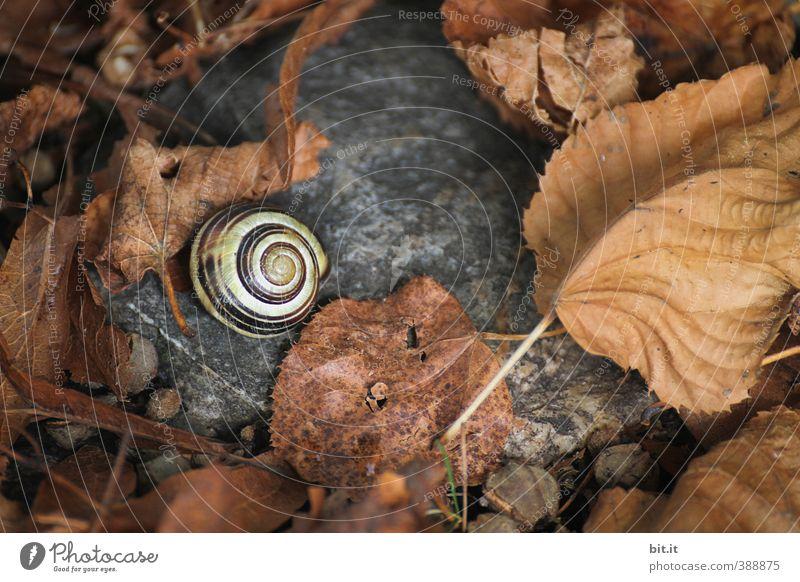 im Schneckennest Natur Pflanze ruhig Tier Blatt Umwelt dunkel Herbst Stein Zeit Vergänglichkeit Wandel & Veränderung rund trocken Verfall unten
