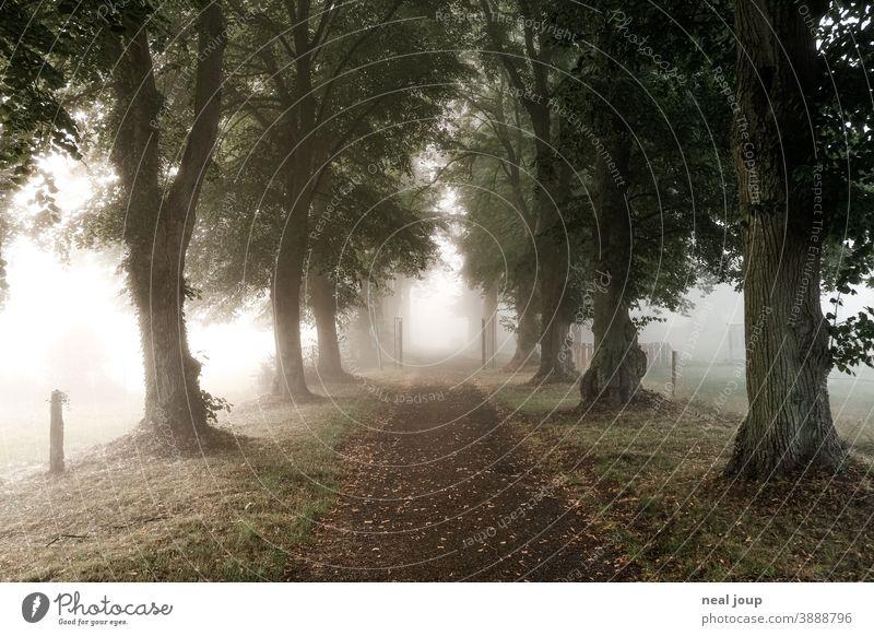 Allee zwischen Baumreihen im Morgennebel Natur morgens erwachen früh Wege & Pfade Bäume Perspektive Richtung Nebel weich diffus poesie Herbst ruhig Umwelt