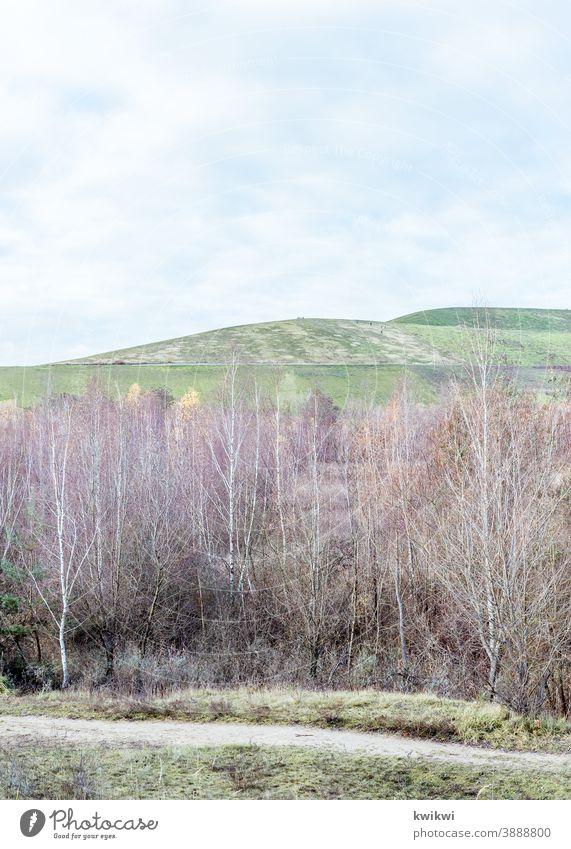 Berlin Hills hügel müllberge landschaft berlin brandenburg bäume Wege & Pfade herbst Winter grün hell lila rosa Wolkenloser Himmel Blauer Himmel himmel hügelig