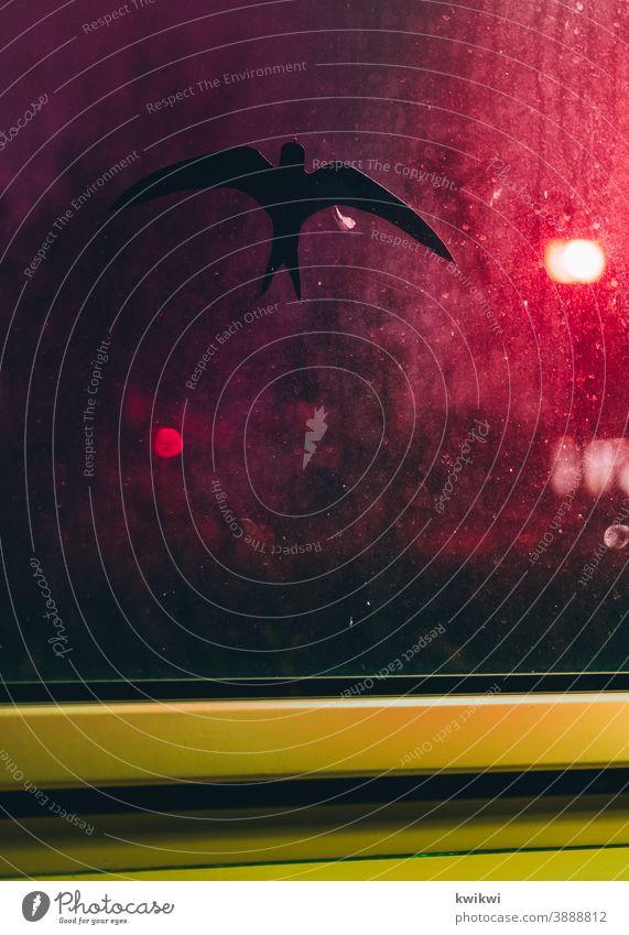 vogel scheibe Fensterscheibe Glas Glasscheibe Reflexion & Spiegelung durchsichtig Haus Scheibe Architektur Menschenleer Farbfoto Stadt Gebäude Häusliches Leben