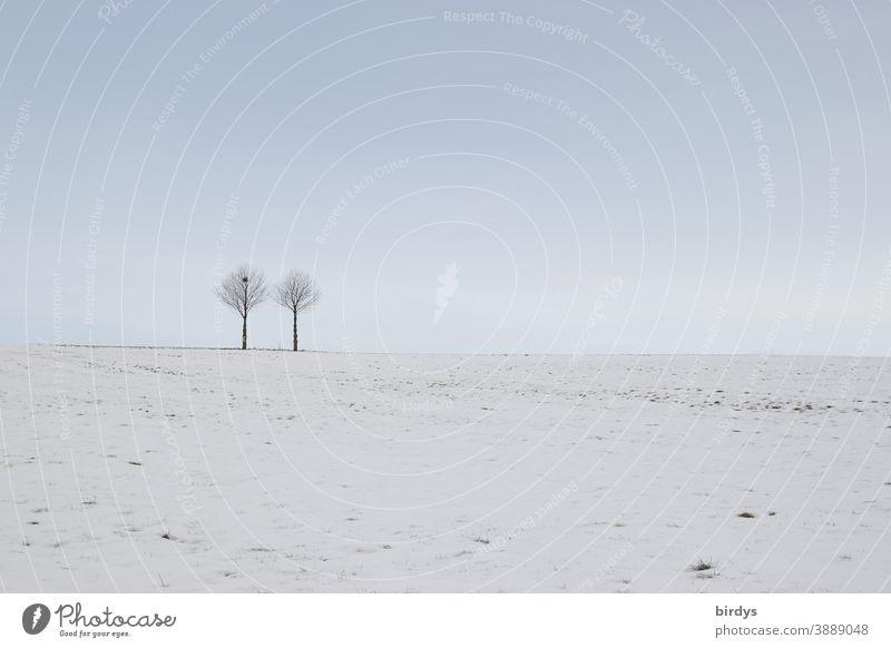 2 Bäume in einer Schneelandschaft, blauer Himmel . gedeckte Farben Baum Winter Natur Winterstimmung schneebedeckt Stillleben Frost kalt schneebedeckte Wiese