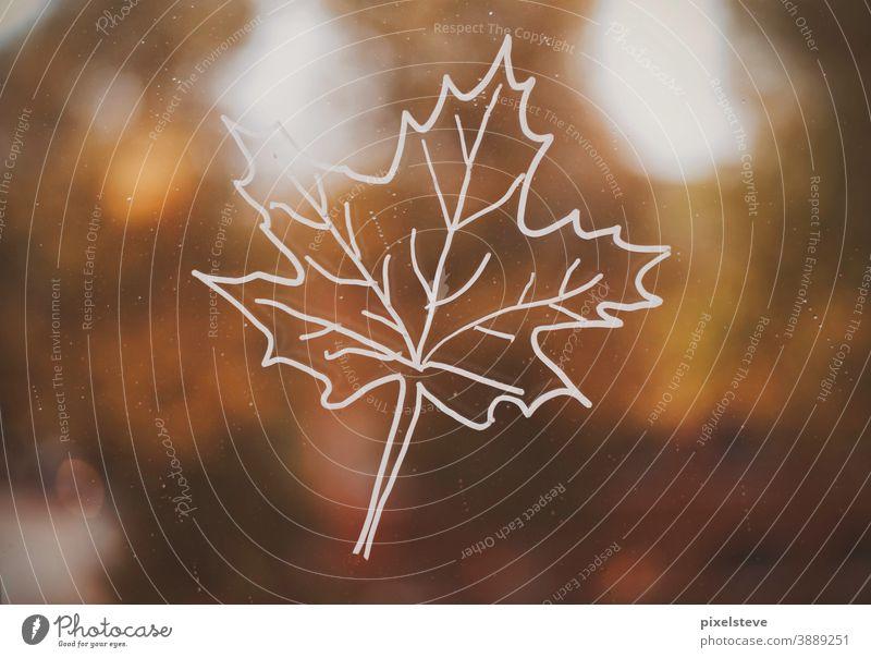 Herbstlaub auf einer Straße Herbstfärbung DIY herbstlich Herbstgefühle Herbstwetter Baum Regentag Fenster Fensterscheibe Jahreszeiten Bäume Blatt braun Asphalt