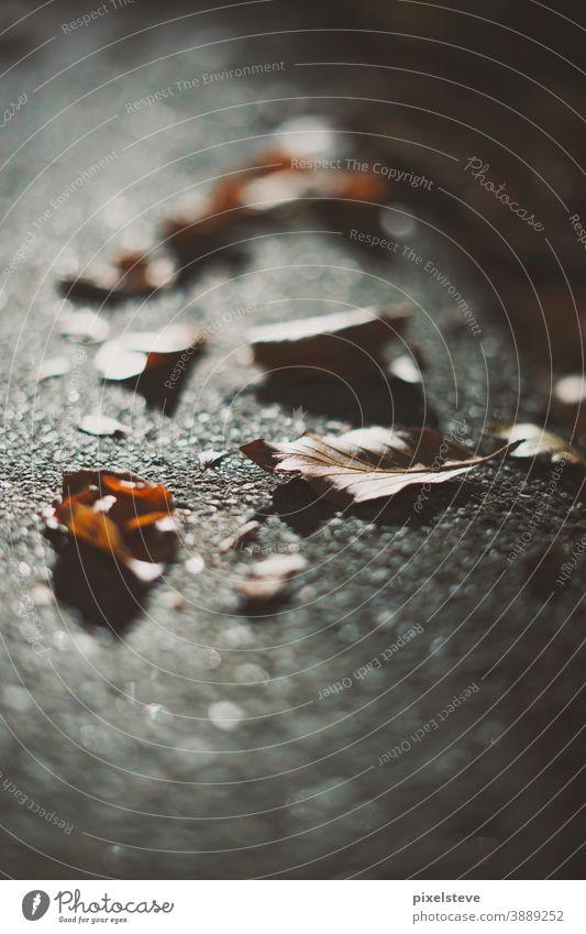 Herbstlaub auf einer Straße Herbstfärbung Depressionen herbstlich Herbstgefühle Herbstwetter Klima Baum Ängste Angst Jahreszeiten Bäume Blatt braun Asphalt