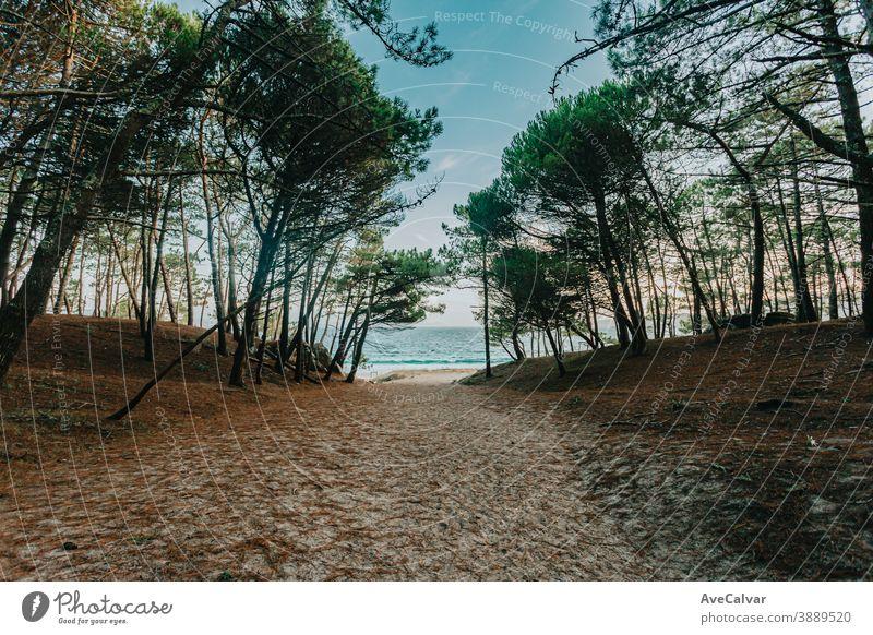 Weg zum Strand, umgeben von Bäumen malerisch Natur Baum Meer Windstille Urlaub Feiertag Himmel idylli Wasser Landschaft sonnig Lagune Bucht tropisch Küste