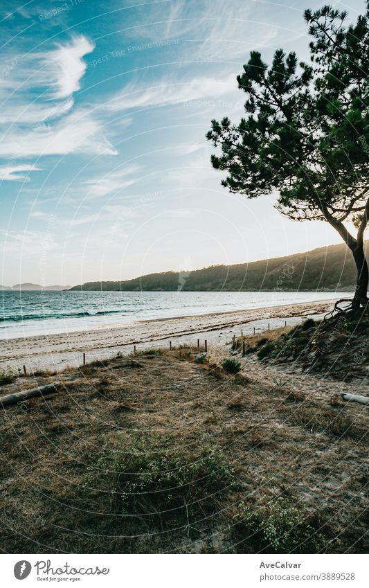 Blick vom Wald auf den Strand malerisch Natur Baum Meer Windstille Urlaub Feiertag Himmel idylli Wasser Landschaft sonnig Lagune Bucht tropisch Küste Sommer