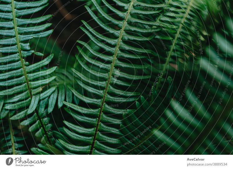 Horizontaler Hintergrund mit einigen strukturierten Blättern auf einem hellen Grün Natur Nahaufnahme Tropfen Blatt grün Tröpfchen Pflanze glänzend üppig (Wuchs)