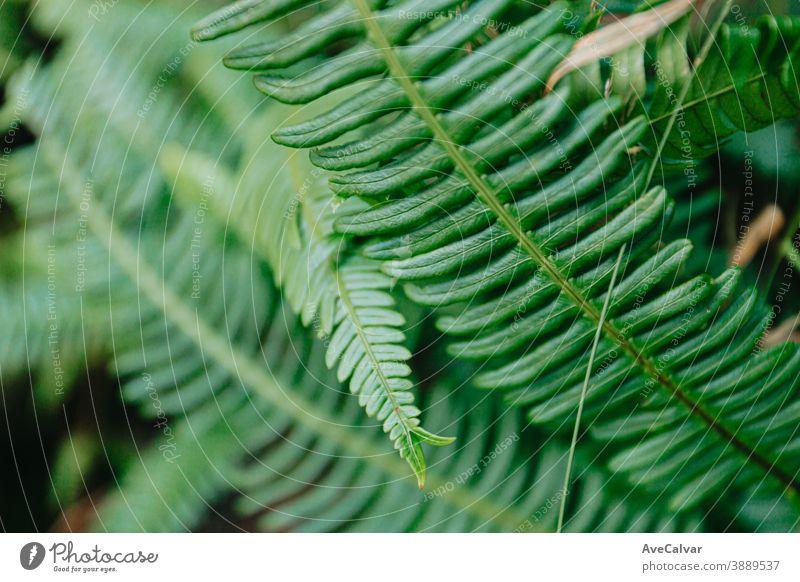 Ein Hintergrund von einigen grünen hellen Blätter im Wald Natur Nahaufnahme Tropfen Blatt Tröpfchen Pflanze glänzend üppig (Wuchs) neu Gemüse Frische Kraut
