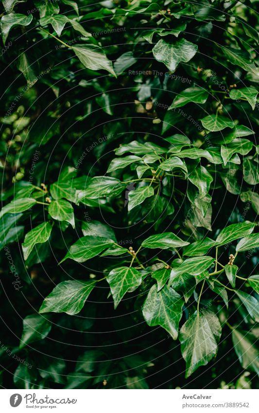 Ein schöner und grüner Hintergrund auf Pflanzenbasis Natur Nahaufnahme Tropfen Blatt Tröpfchen glänzend üppig (Wuchs) neu Gemüse Frische Kraut Regentropfen
