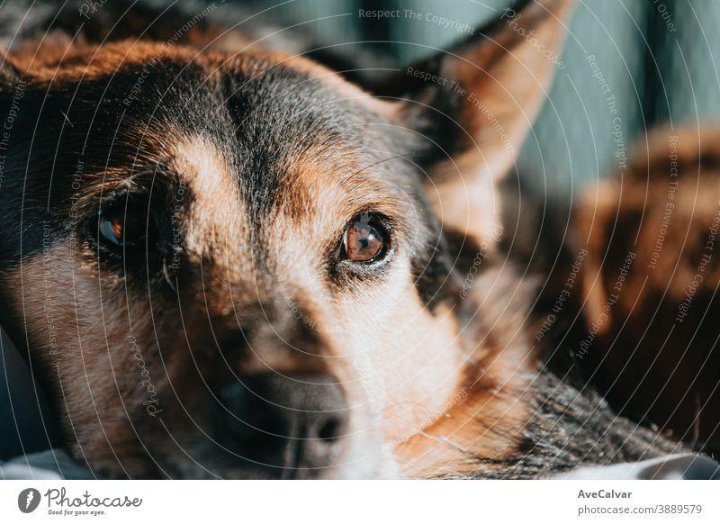 Netter brauner und schwarzer Hund schaut weg von der Kamera während eines hellen Tages mit Kopie Raum Fernsehen Zusammengehörigkeitsgefühl umarmend