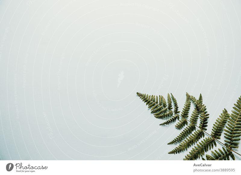 Ein minimalistischer Hintergrund mit einem Farn in der Ecke heimwärts hölzern leer Zimmerpflanze sehr wenige Gummifeige Inneneinrichtung Panel frisch