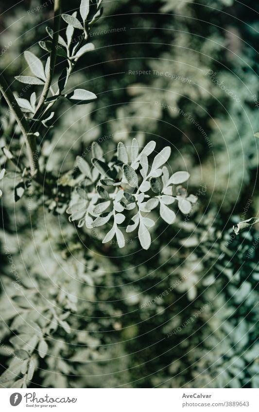 Eine entsättigte grüne Pflanze über einem hellgrünen Hintergrund Natur im Freien abschließen Wachstum Umwelt Frühling Baum niemand Farbbild pulsierend