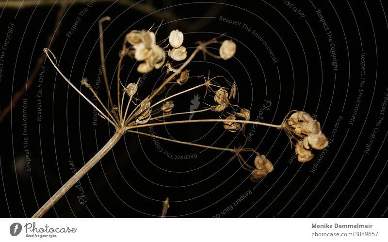 vergängliche Natur Außenaufnahme Pflanze Umwelt Landschaft Menschenleer Farbfoto Wald natürlich Licht Sträucher Herbst Vergänglichkeit Low Key Dämmerung