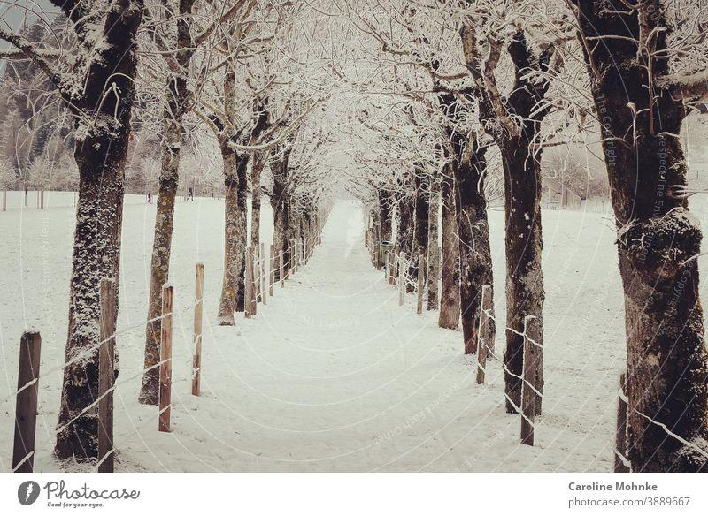 Schneebedeckter Weg zwischen Bäumen Winter Winterlandschaft Landschaft Natur Frost Außenaufnahme Menschenleer Farbfoto Umwelt Baum Nebel Winterstimmung Eis