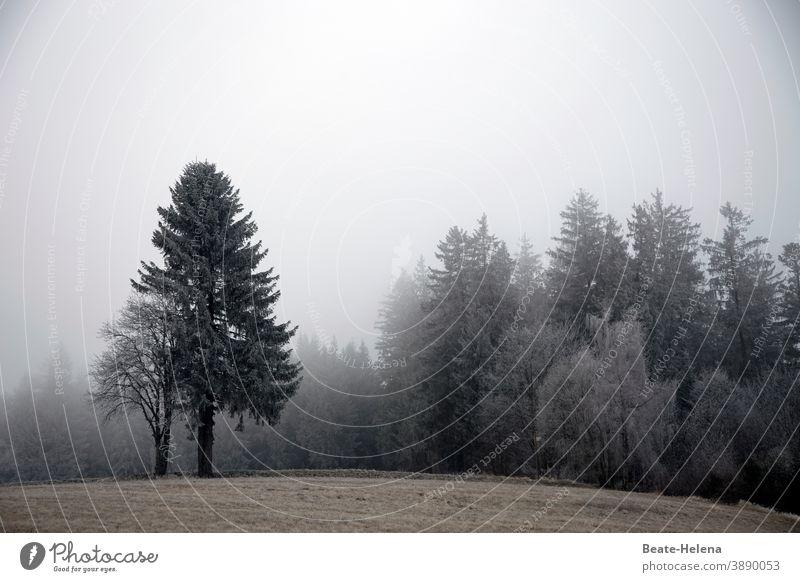 Trübe Zeiten nicht nur im nebligen Schwarzwald ... Spätherbst Winter Nebel Tannenbaum Baum Wald Himmel Landschaft Außenaufnahme Morgennebel trüb