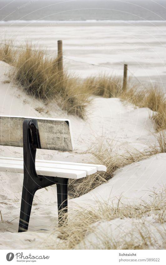 Schöne Aussichten Natur Landschaft Sand Horizont Schönes Wetter Gras Küste Strand Nordsee Meer Insel Ferien & Urlaub & Reisen Düne Stranddüne Dünengras Bank