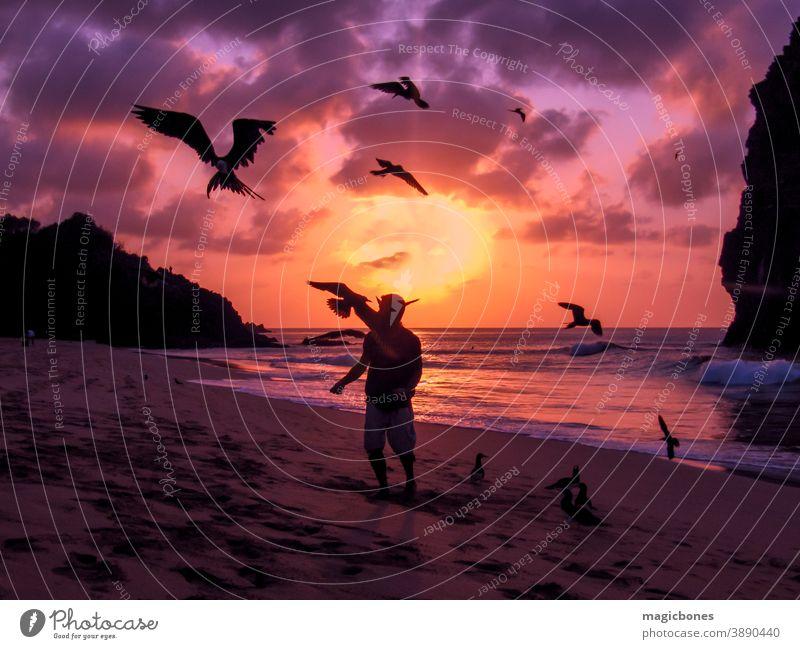 Fliegende Fregattvögel werden gefüttert Fernando de Noronha, Brasilien fernando de noronha Sonnenuntergang Fregatte Vögel Strand Silhouette Süden amerika Wolken