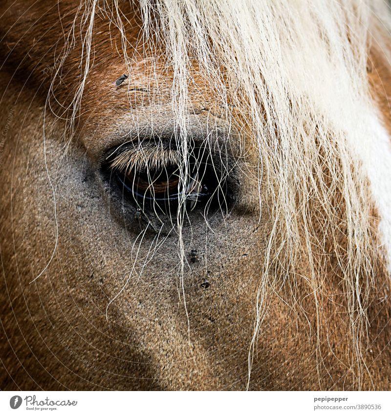 Pferdegesicht, Nahaufnahme mit Auge Gesicht Tier Natur tierportrait Tierportrait Mähne Haare & Frisuren braun Fell Säugetier Kopf Tierporträt Tiergesicht schön