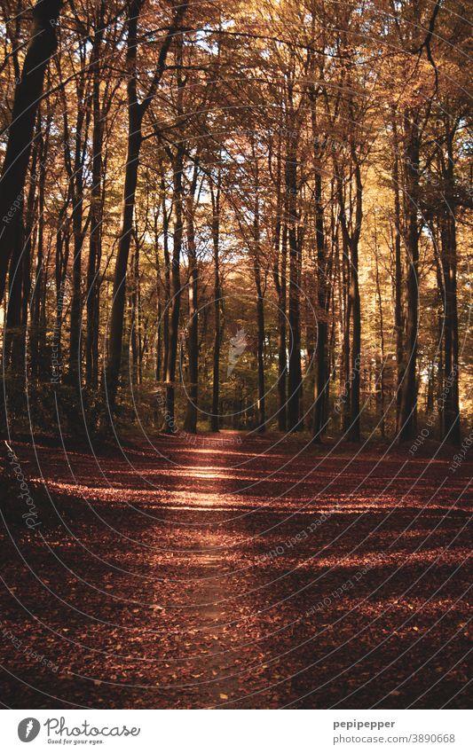 Waldweg im Herbst Weg Natur Baum Außenaufnahme Pflanze Wege & Pfade Menschenleer Farbfoto braun Bäume Fußweg Sonnenlicht wandern Schatten Erholung