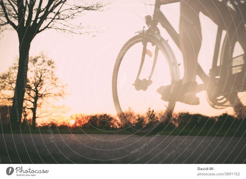 bei Sonnenuntergang unterwegs mit dem Rad Fahrradfahren Straße Mann stimmungsvoll Geschwindigkeit Wege & Pfade Natur radfahrer