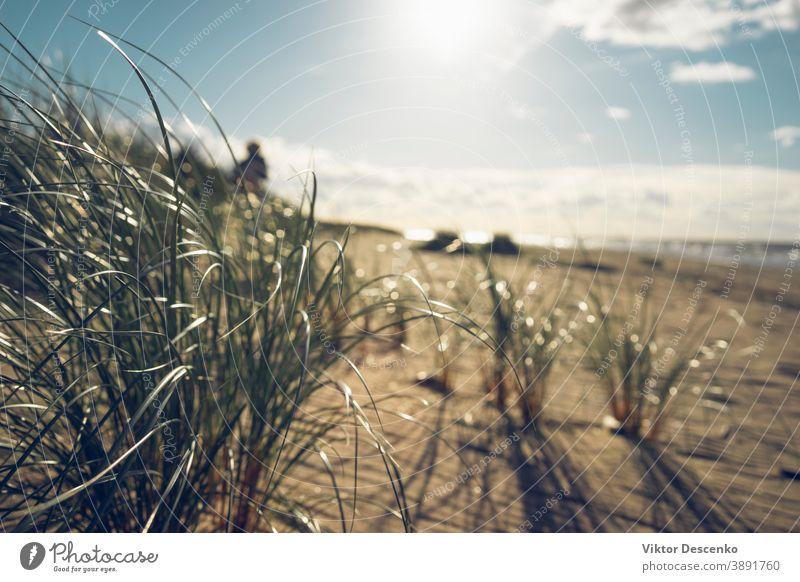 Sanddünen mit grünem Gras im Herbst Hintergrund Strand Baum Wasser Sommer Natur natürlich Pflanze im Freien Landschaft blau Himmel gelb schön reisen Küstenlinie