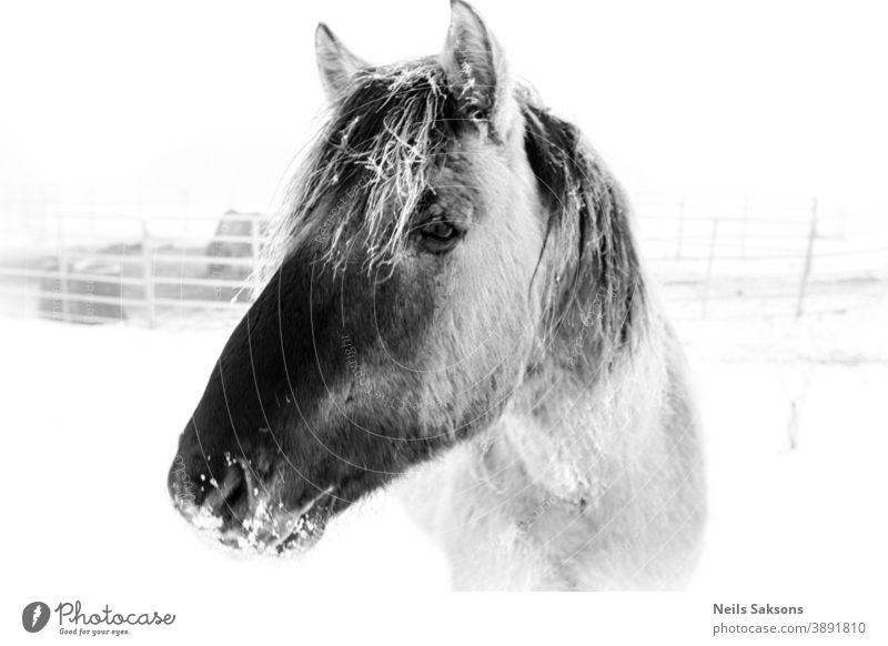 Porträt eines Pferdes Tier Kopf Bauernhof pferdeähnlich Hengst Natur Mähne Säugetier Stute wild Reiterin Auge Gras Ponys Schönheit Himmel Feld Tiere Gesicht