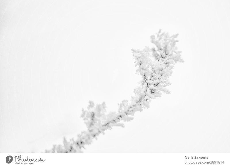 Verzweigungen bei Raureif und Schnee im Winter Februar Hintergrund Unschärfe Bokeh Botanik Ast hell kalt cool Kristalle Dezember Umwelt fallen Feld Flora Wald
