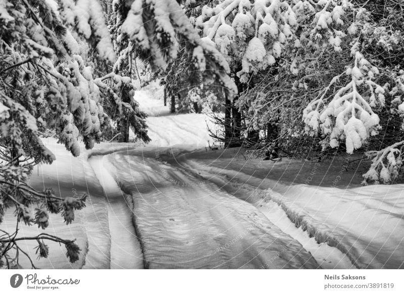 Blick auf die winterliche Landschaft nach einem Schneesturm in Lettland Hintergrund schön Niederlassungen Küste kalt Tag Wald Frost gefroren Eis eisig natürlich