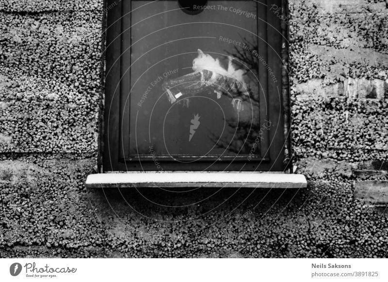Katze im Fenster Tier Hintergrund schön Nahaufnahme niedlich Tag katzenhaft fluffig Rahmen Fell grau Behaarung heimwärts Landschaft Licht Aussehen Blick