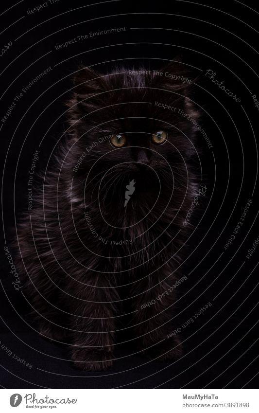 kleines schwarzes Kätzchen auf schwarzem Hintergrund im Atelier Katzenbaby Tier Porträt Fell Auge Fussel