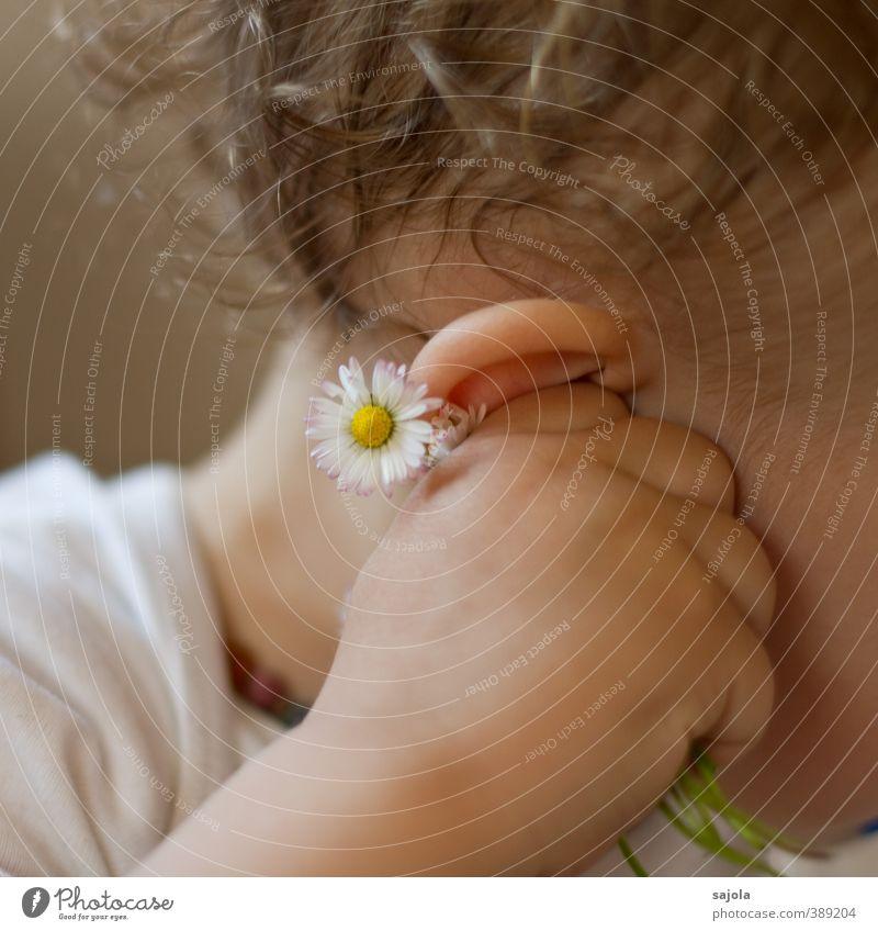 Hörst du, was die Gänseblümchen flüstern? Mensch Kind Pflanze Hand Blume festhalten Ohr hören Kleinkind 1-3 Jahre