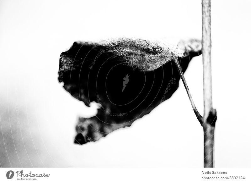 gefrorenes trockenes letztes Blatt Flieder Herbst Hintergrund blau Ast braun bedeckt Tag getrocknet Abend fallen Schuppen Wald horizontal Landschaft Blätter