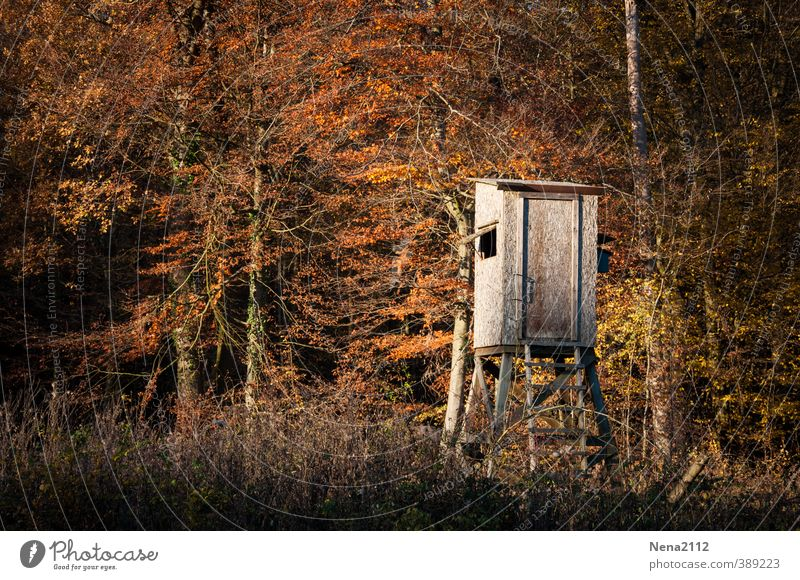 Hochsitz ins Licht Jagd Umwelt Natur Erde Herbst Schönes Wetter Baum Sträucher Wald Waldlichtung Waldrand Spaziergang Holz Holzhütte braun gold Oktober November