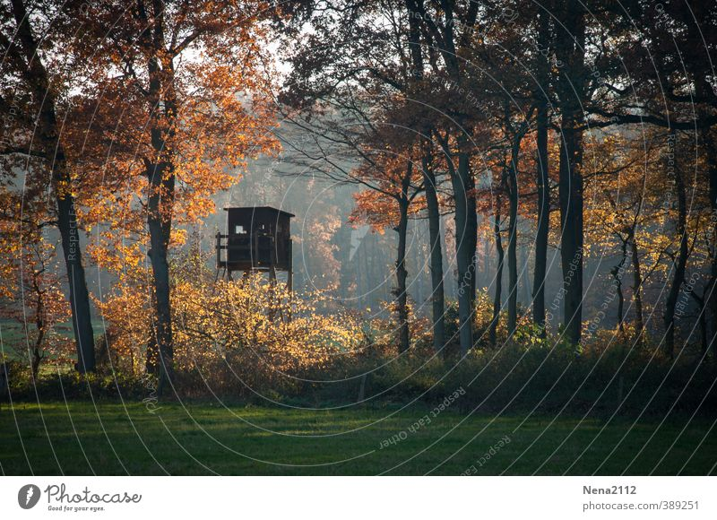 herbstliches Gefühl Natur Baum Landschaft Blatt schwarz Wald Umwelt Wiese Herbst Holz Feld gold Erde Klima Schönes Wetter Urelemente