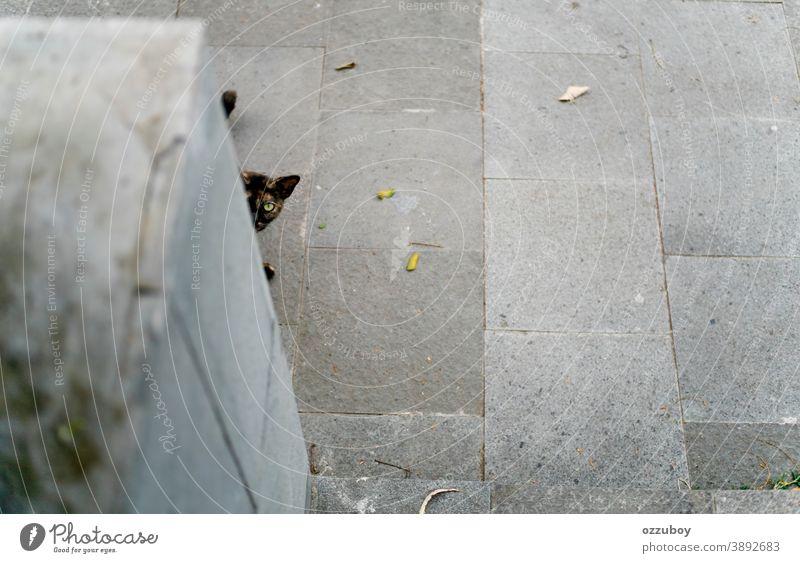 Kuckuck! Peekaboo Katze Hauskatze Haustier Tier Säugetier Katzenauge Tierporträt Schnurrhaar Fell Tiergesicht niedlich Katzenkopf Blick beobachten