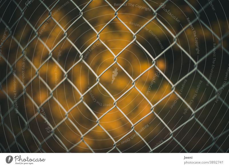 Maschendrahtzaun vor verschwommenem gelb leuchtenden Hintergrund leuchtende Farben orange Herbst Blätter Blatt Herbstlaub herbstlich Herbstfärbung Herbstbeginn