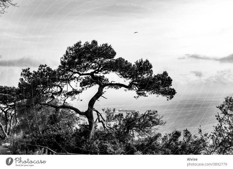 baum in der bucht von gibraltar Baum Natur Silhouette Wald Ast vereinzelt Holz Grundriss Design Hintergrund Pflanze Kulisse weiß Kofferraum Saison Form schwarz